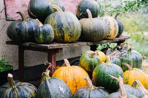 Бесплатное стоковое фото с выращивать, группа, декорация