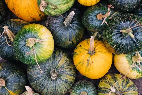 Бесплатное стоковое фото с выращивать, День благодарения, еда