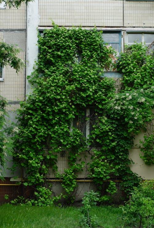 Fotobanka sbezplatnými fotkami na tému architektúra, budova, exteriéry