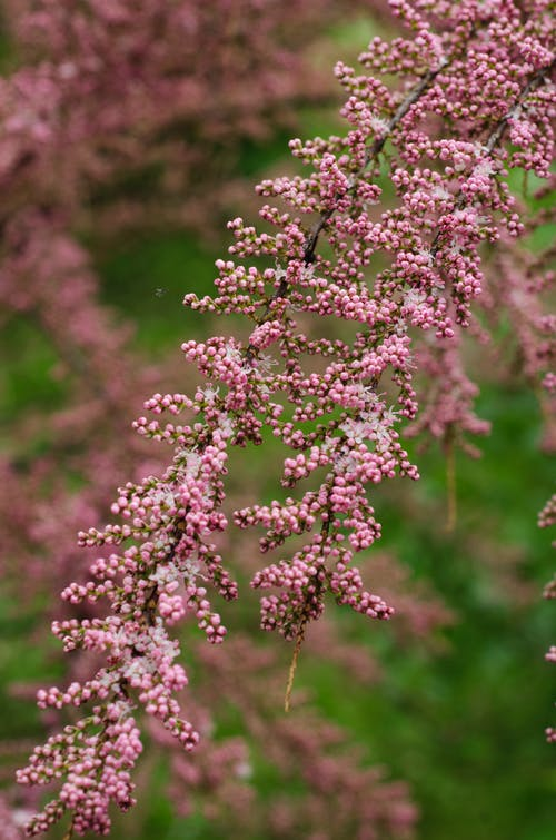 Pink Flowers on Plant Branch