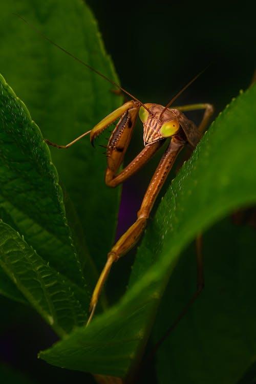 Close-UpView of Mantis