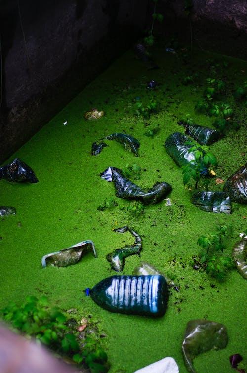 Ilmainen kuvapankkikuva tunnisteilla ekologia, ekosysteemi, kasvit