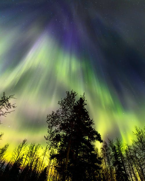 Aurora Borealis over Northern Forest