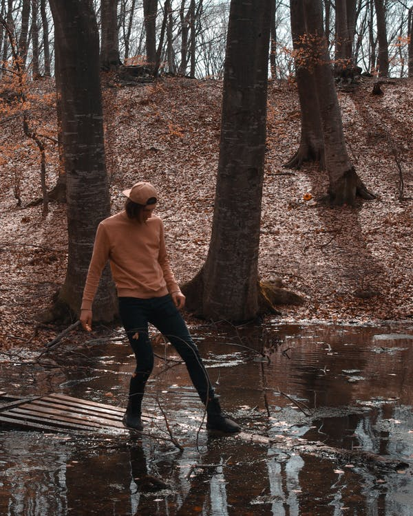 вода, дерева, Деревина