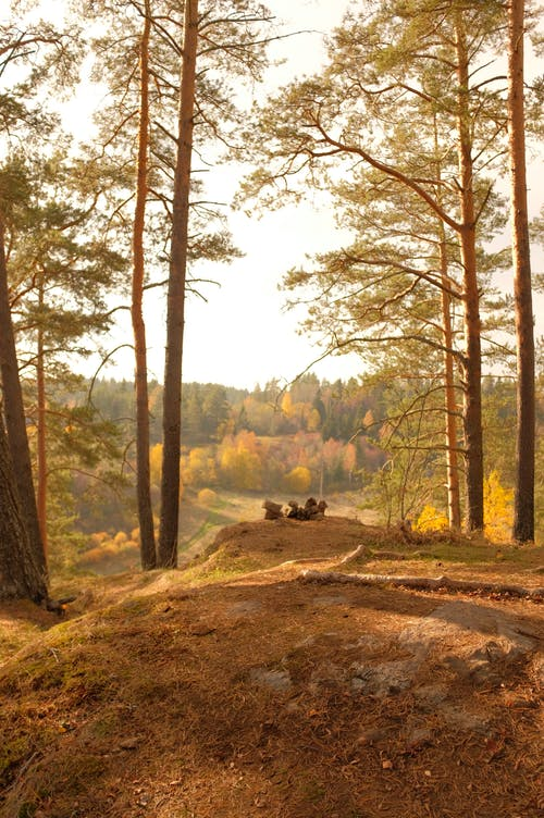 Autumn Landscape of Hill in Forest