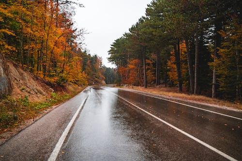 Gratis lagerfoto af asfalt, atmosfera de outono, bjerg