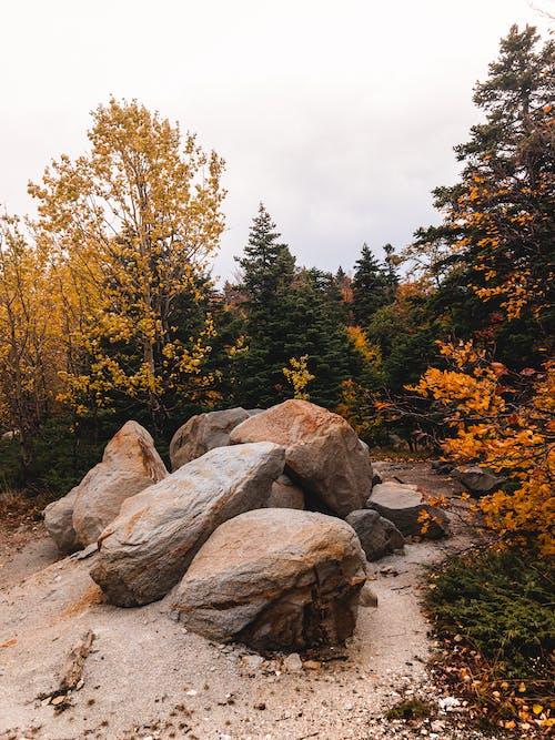 Gratis lagerfoto af atmosfera de outono, bjerg, blad