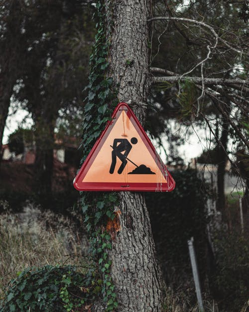 Foto profissional grátis de alerta, ao ar livre, árvore
