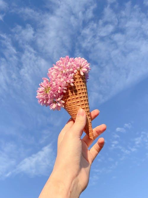 Foto stok gratis berwarna merah muda, bunga, cone