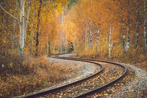 Railroad Tracks Running Through Autumn Birch Forest