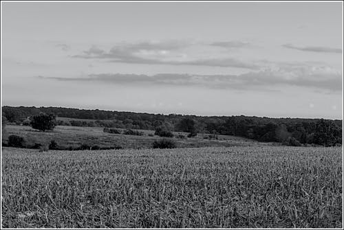 Free stock photo of black and white, clouds, cornfield