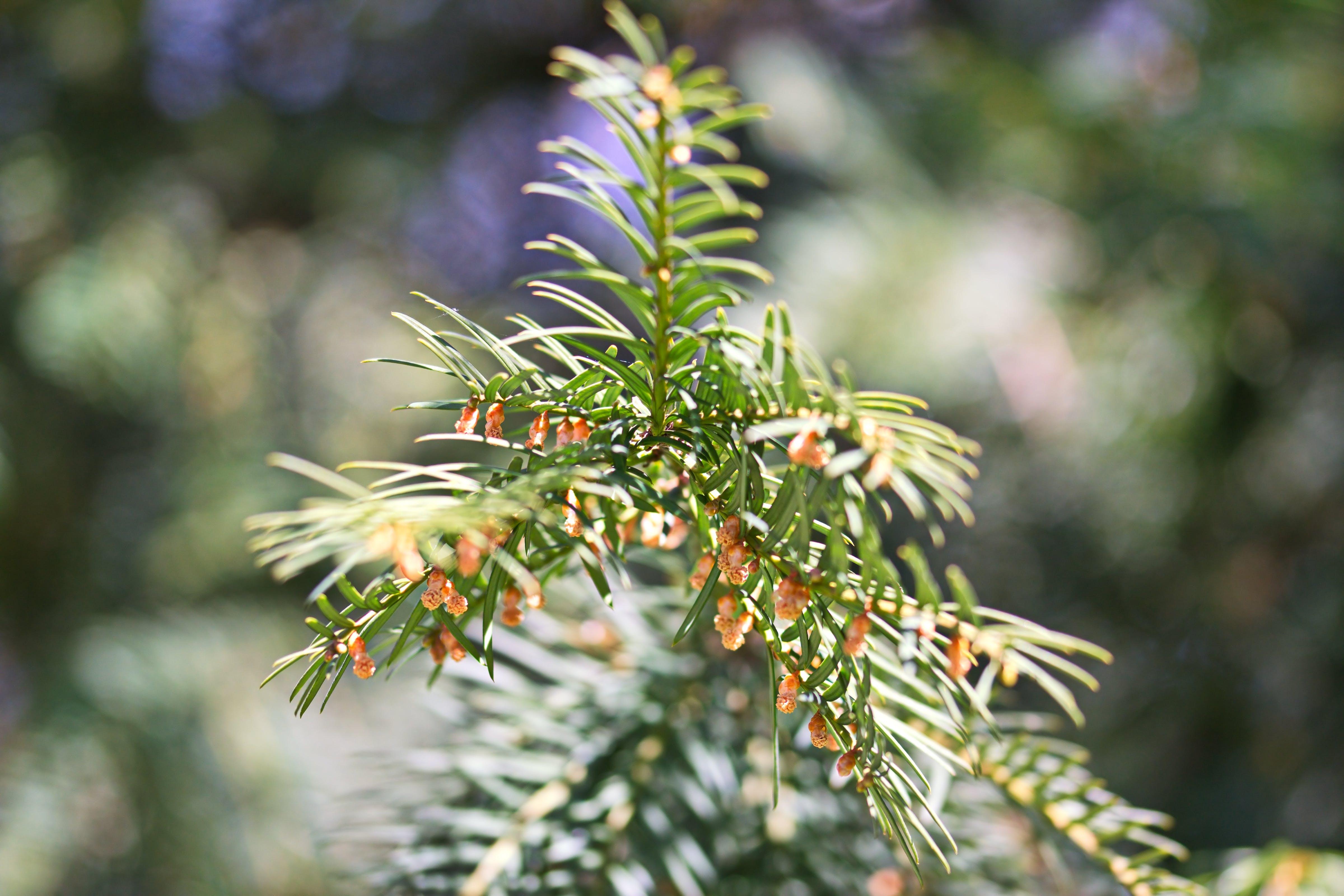 Closeup Photo of Thorn Leaf Plant