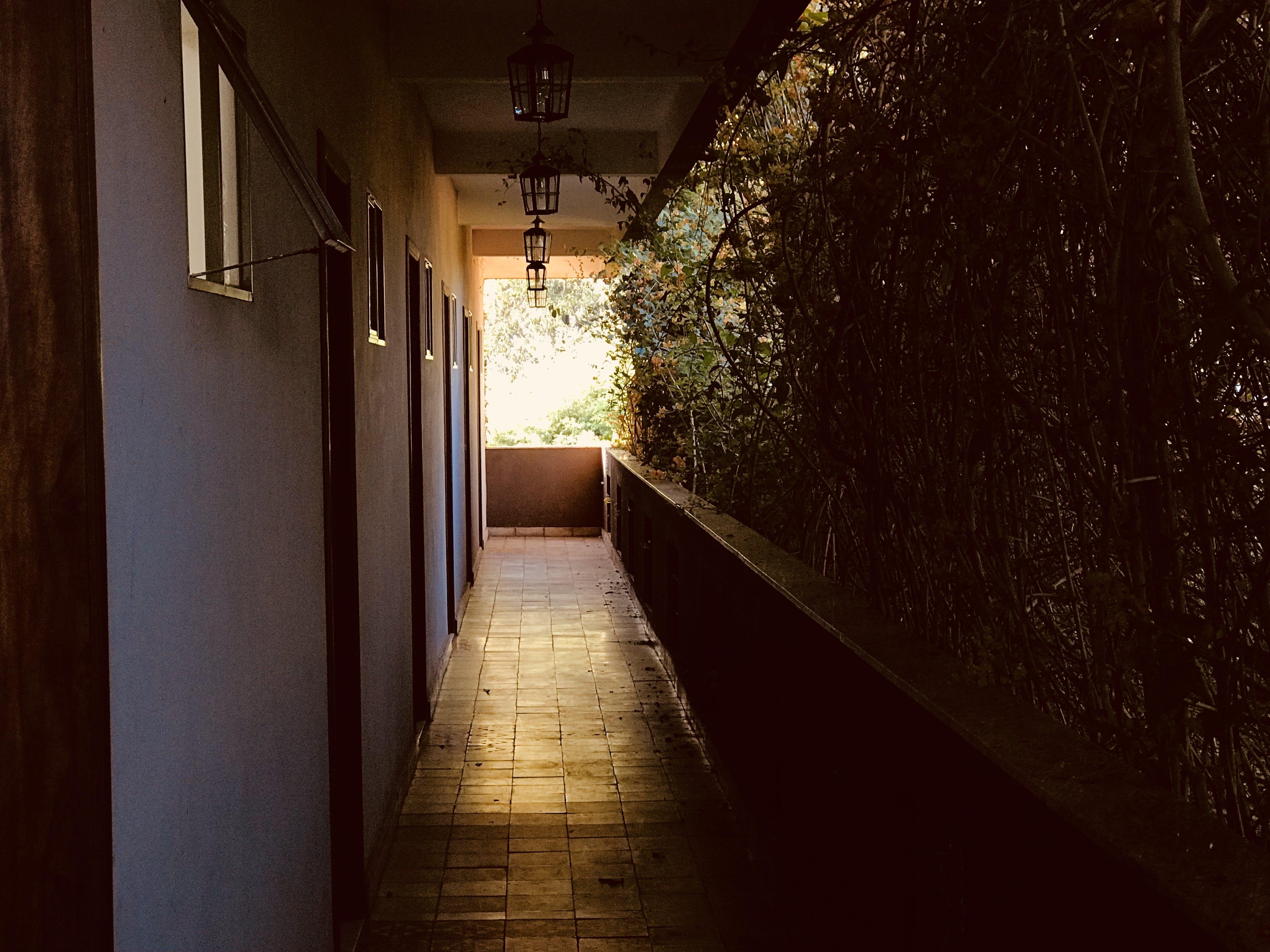 Ảnh lưu trữ miễn phí về ánh sáng, cây, hành lang, hướng dẫn