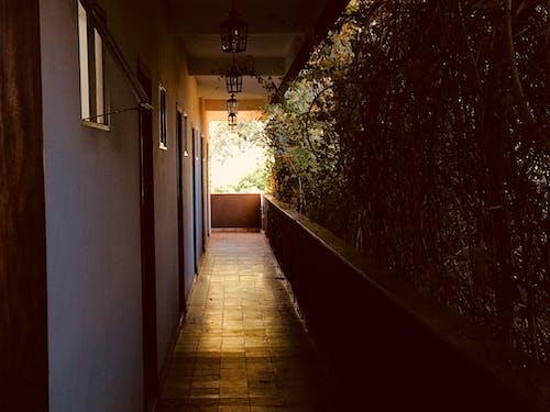 Immagine gratuita di alberi, architettura, casa, corridoio