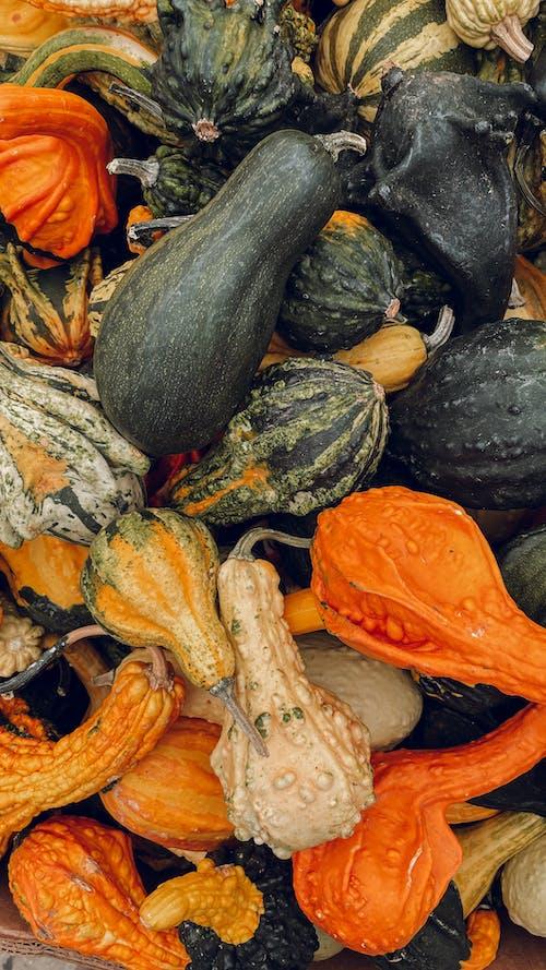 インドア, かぼちゃ, ヒープの無料の写真素材
