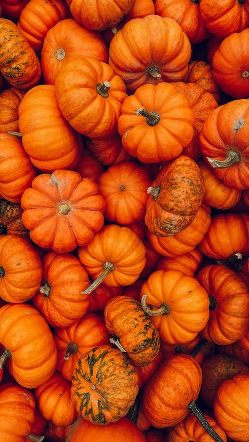 インドア, オレンジ, かぼちゃの無料の写真素材
