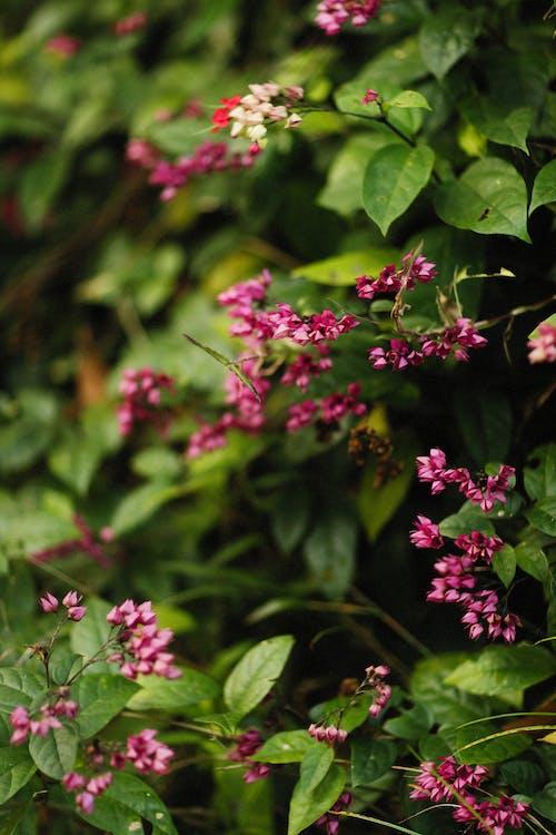 꽃, 녹색, 분홍색의 무료 스톡 사진