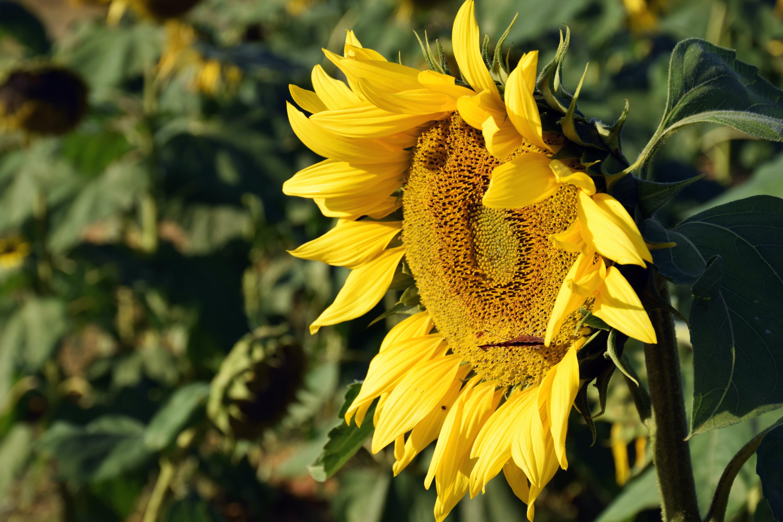 Darmowe zdjęcie z galerii z flora, jaskrawy, jasny, kolor