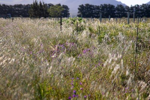 Fotobanka sbezplatnými fotkami na tému dedinský, divý, divý kvet