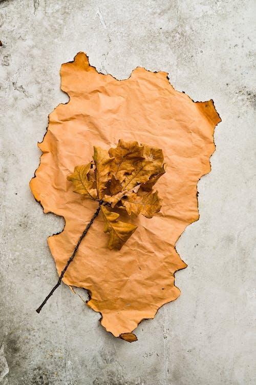 Brown Maple Leaf on Gray Concrete Floor