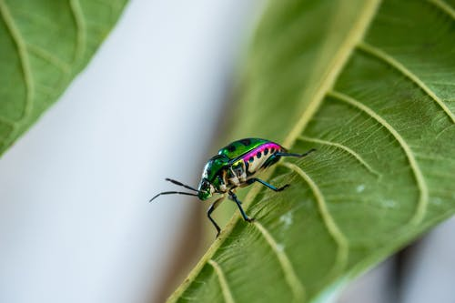 Green and Black Bug on Green Leaf