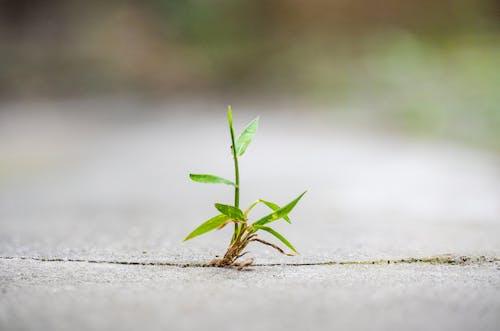 Green Plant on Gray Concrete