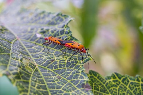 Orange and Black Ladybug on Green Leaf in Close Up Photography