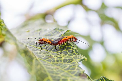 Orange and Black Insect on Green Leaf