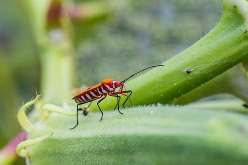 Brown and Black Striped Bug on Green Leaf