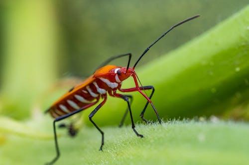 Orange and Black Striped Bug on Green Leaf