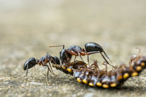Black Ant on Brown Wooden Surface