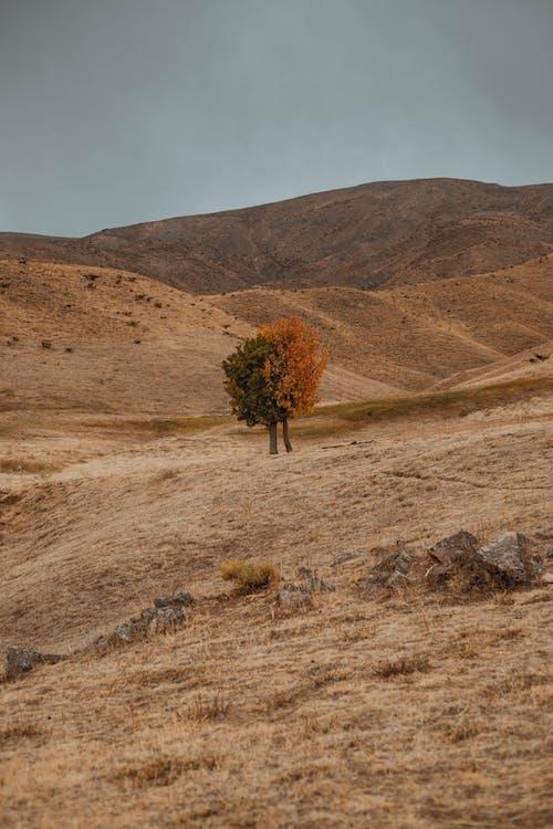 Green Tree on Brown Field
