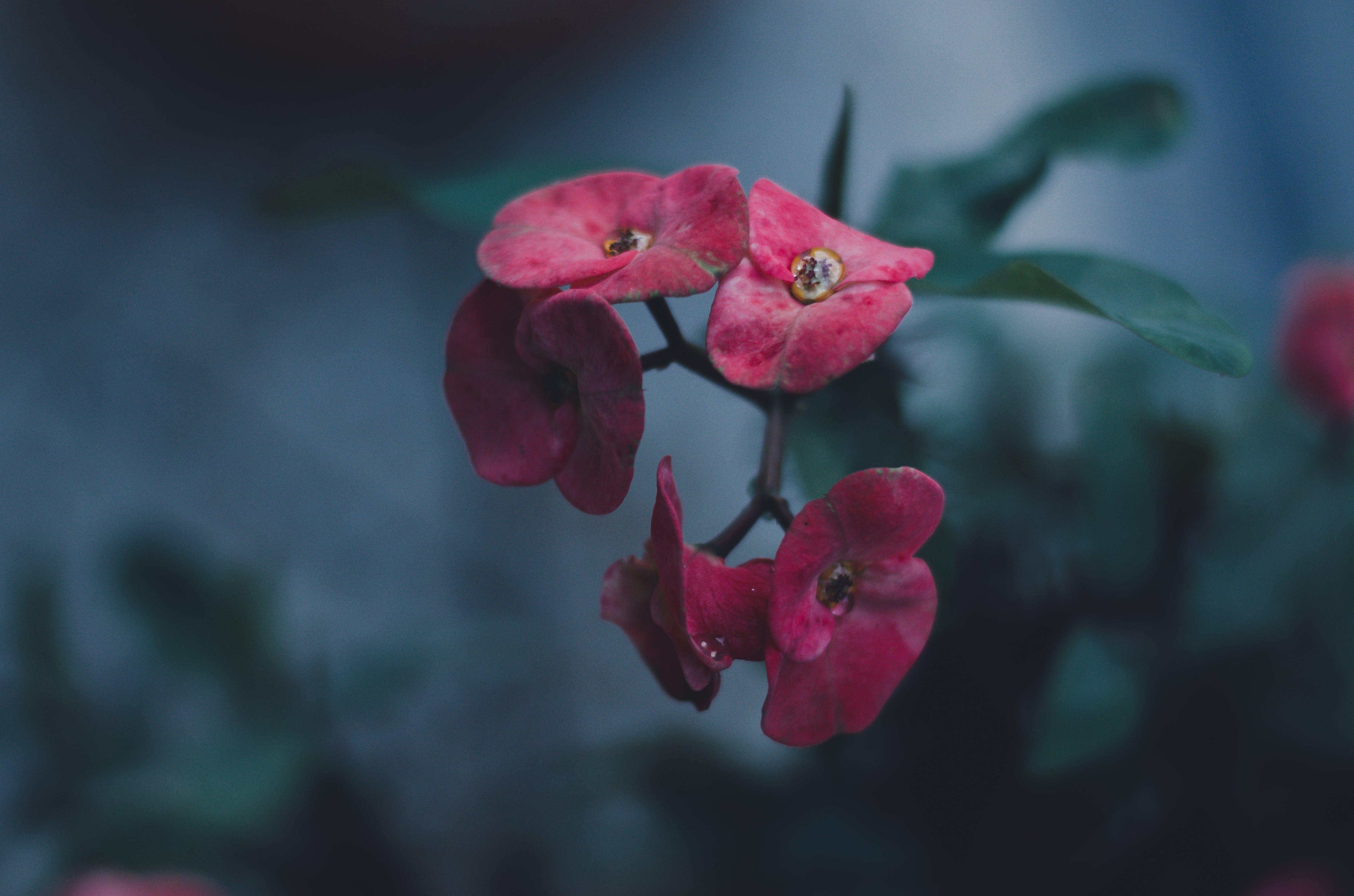 Free stock photo of dark, flower, greens, plant