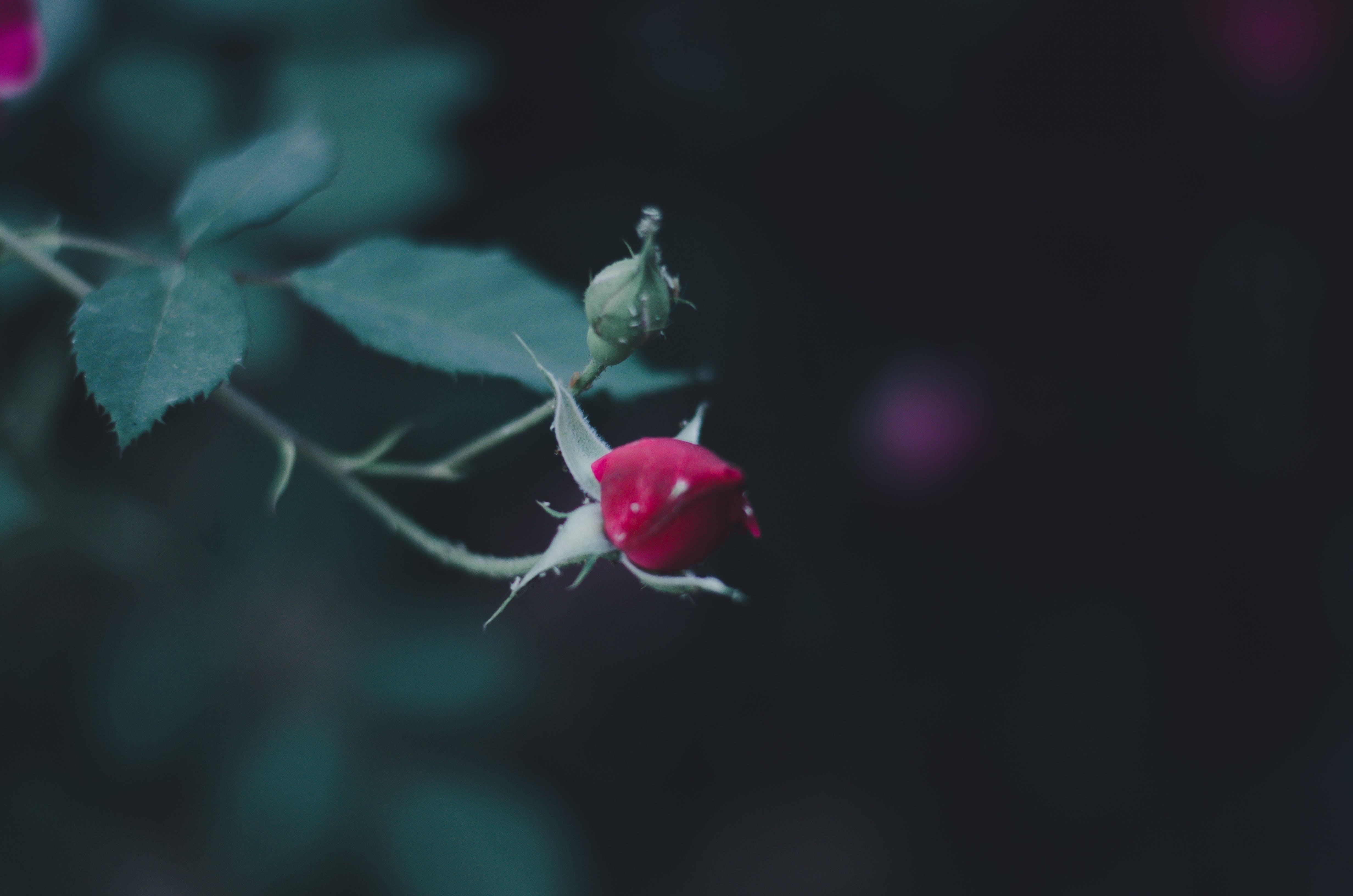 Free stock photo of flower, green, leaf, petal
