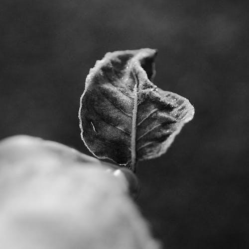 Imagine de stoc gratuită din a închide, alb-negru, congelat