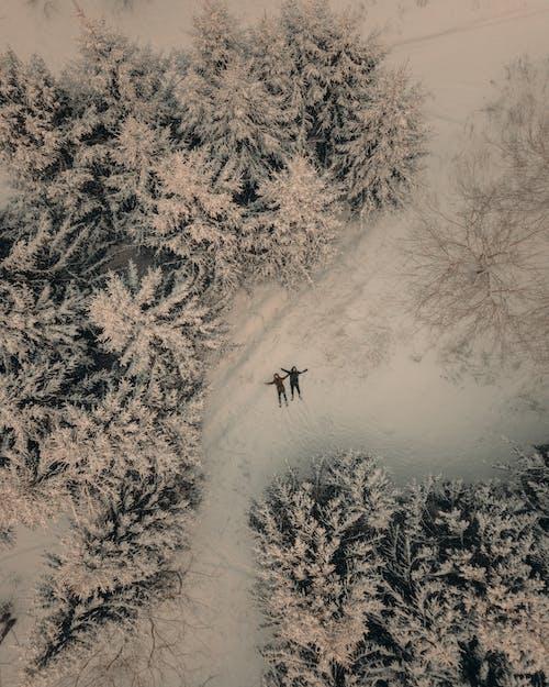 Fotobanka sbezplatnými fotkami na tému biela, chladný, exteriéry