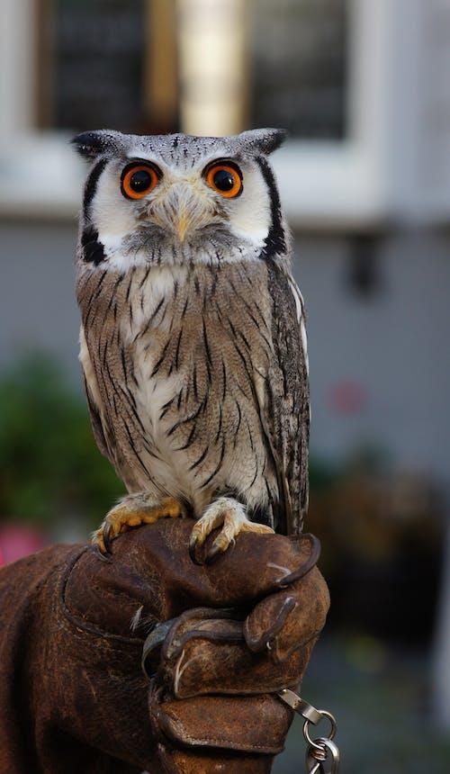 人的手, 动物学, 動物 的 免费素材图片