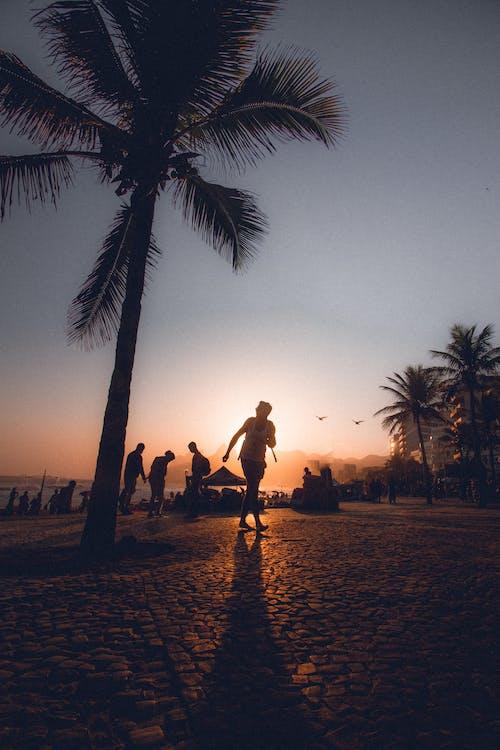 Foto d'estoc gratuïta de a l'aire lliure, capvespre, coco