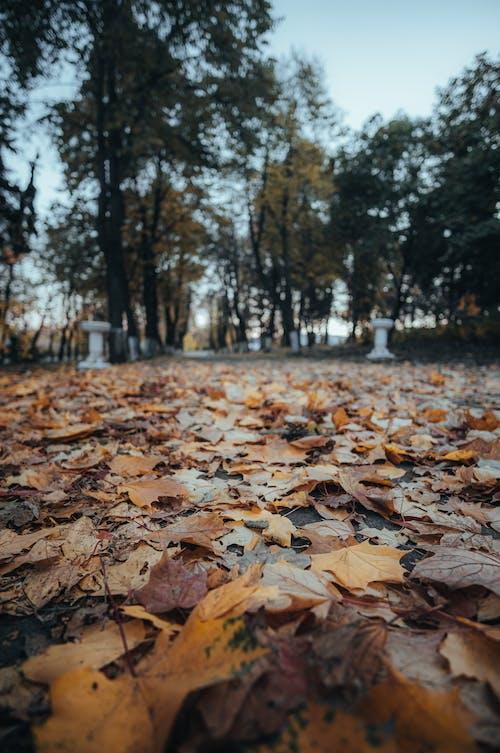 Gratis stockfoto met aarde, blad, boom