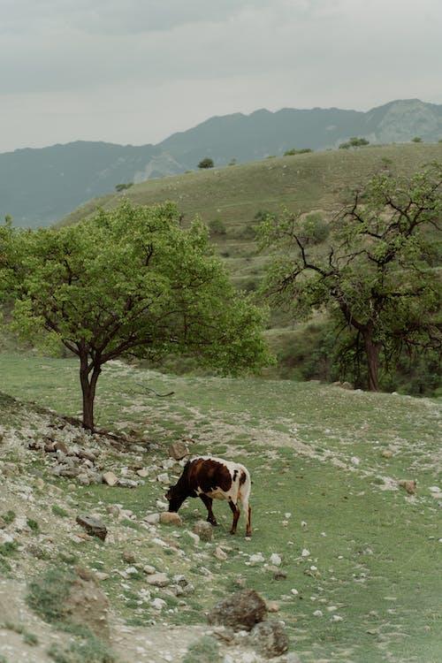 Základová fotografie zdarma na téma farma, hřiště, kopec
