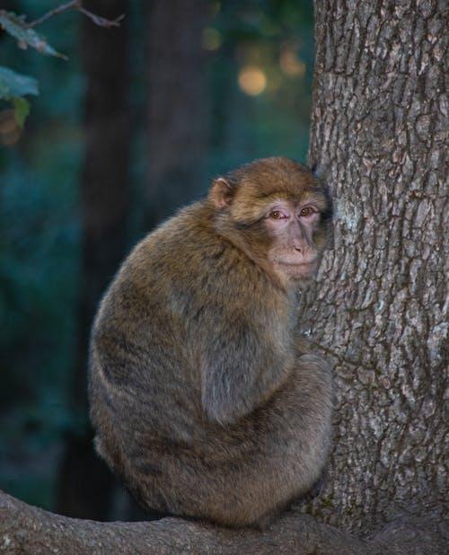 Brown Monkey on Brown Tree