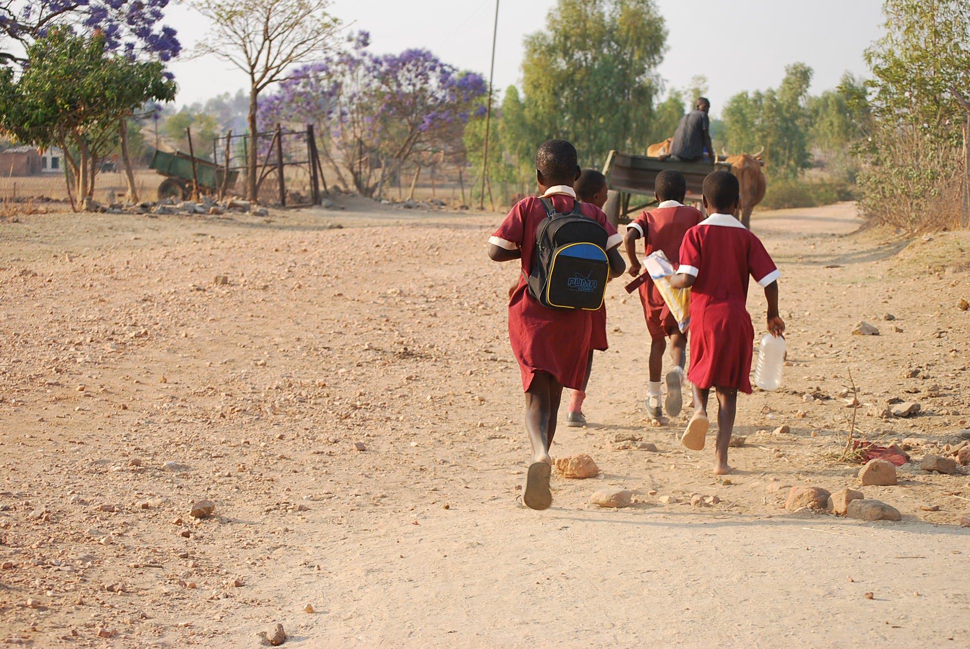 Gratis lagerfoto af jacaranda træ, køer, rygsæk, skolebørn