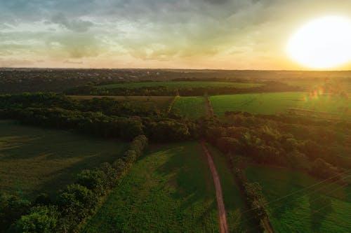 Безкоштовне стокове фото на тему «вечір, дерево, Захід сонця»