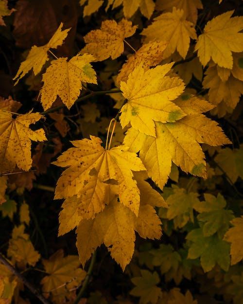 Gratis arkivbilde med blad, blader, falle