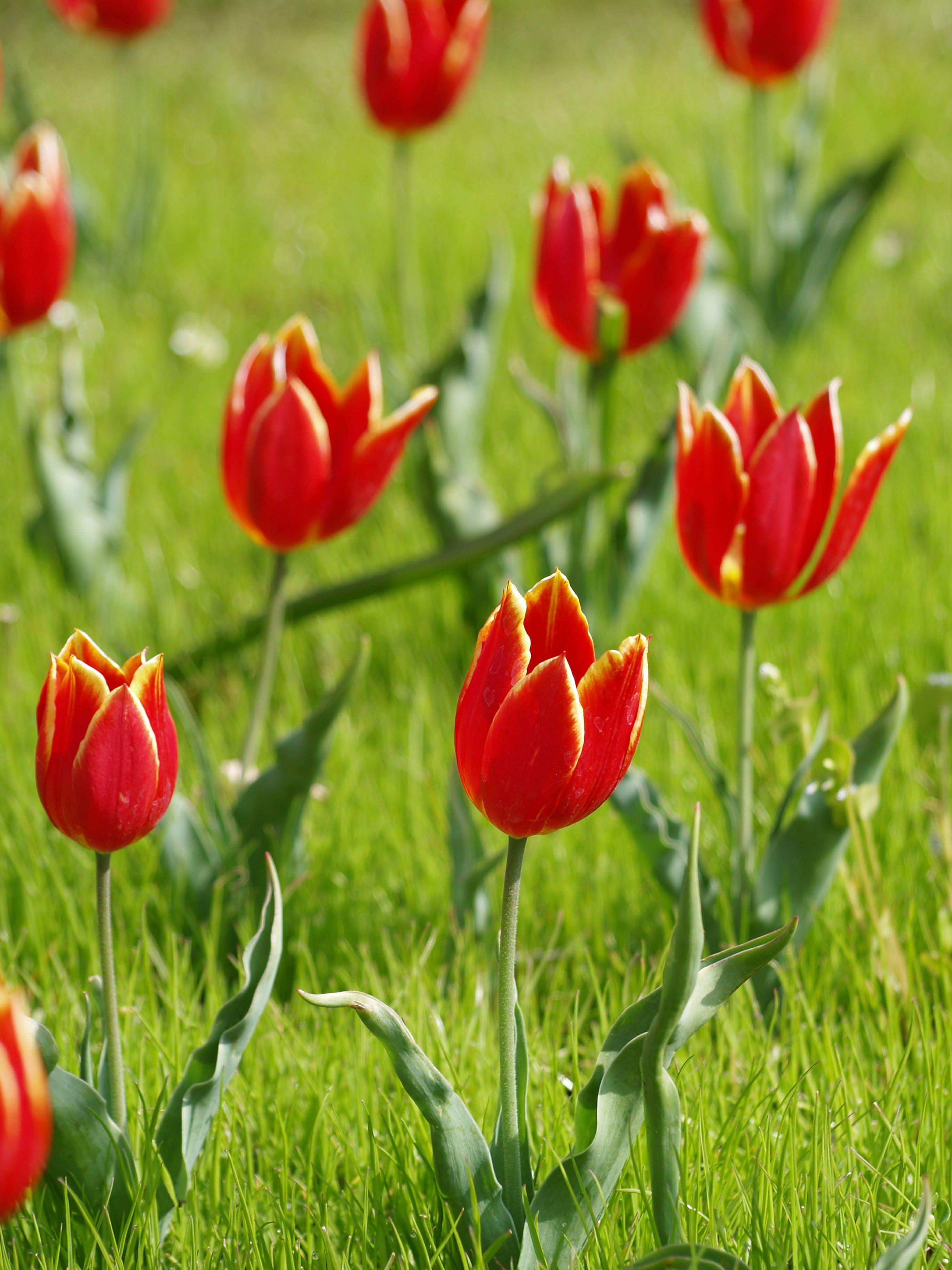 alan, Bahçe, bitki örtüsü, büyüme içeren Ücretsiz stok fotoğraf