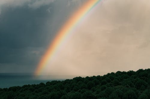 Rainbow Under Forest and Sea