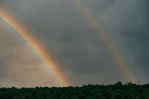 Double Rainbow Under Forest