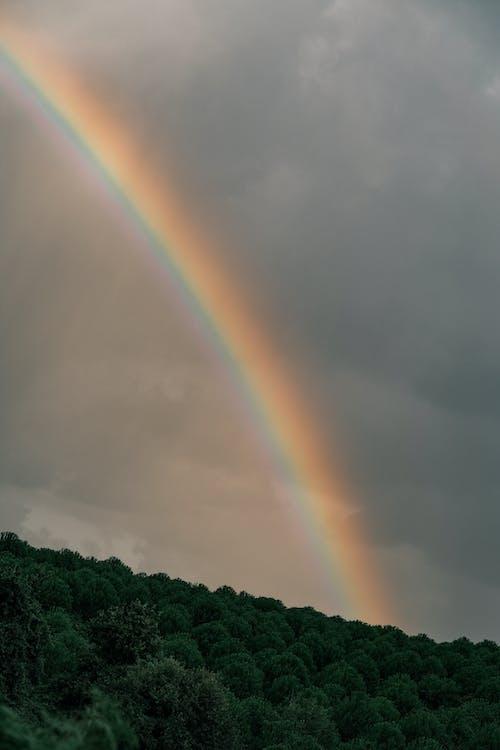Rainbow Under Forest