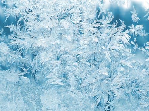 Бесплатное стоковое фото с белый, зима, лед, перья