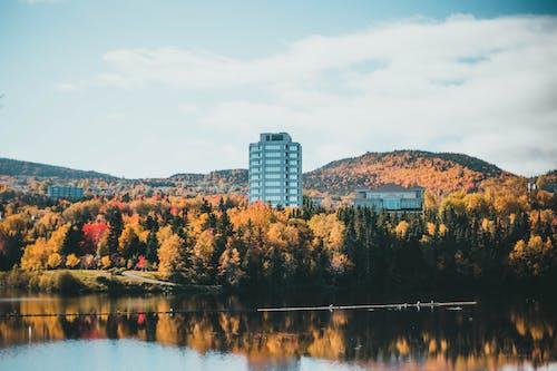 Fotos de stock gratuitas de al aire libre, belleza en la naturaleza, bosque